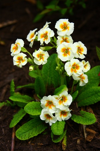 Primrose - Photo Print - Aaron Grabiak Photography & Fine Art.