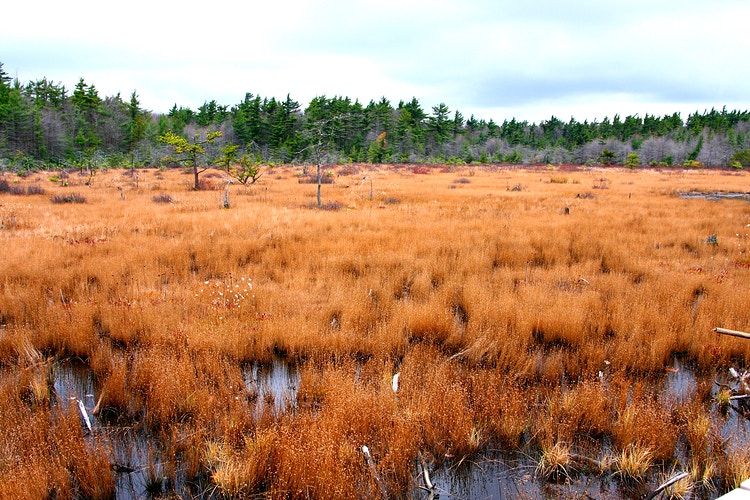 White Cedar Bog - Photo Print - Aaron Grabiak Photography & Fine Art.