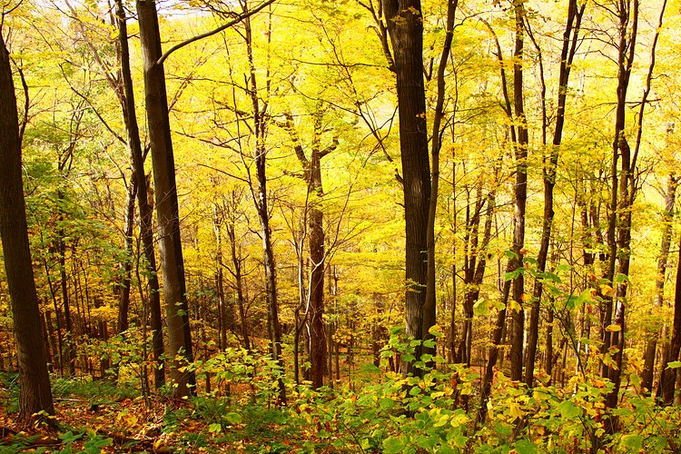 Pennsylvania Autumn, I - Photo Print - Aaron Grabiak Photography & Fine Art.