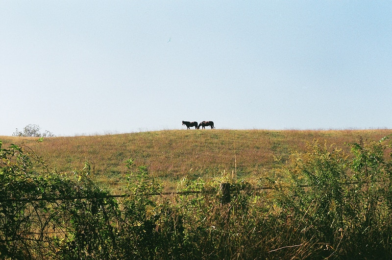 Horses Grazing - Andrew Hutchins