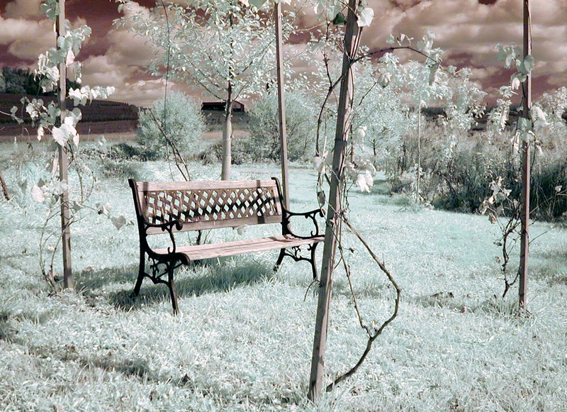 Grape Arbor - Alexis Dillon | PHOTOGRAPHER