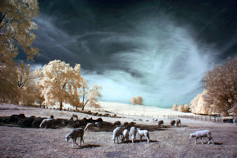 Photo Digital Infrared - Alexis Dillon | PHOTOGRAPHER