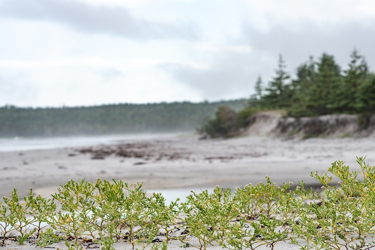Nova Scotia - Aleyah Solomon Photography