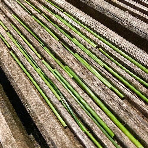 Grass stalks and decking boards - Alison Jackson-Bass