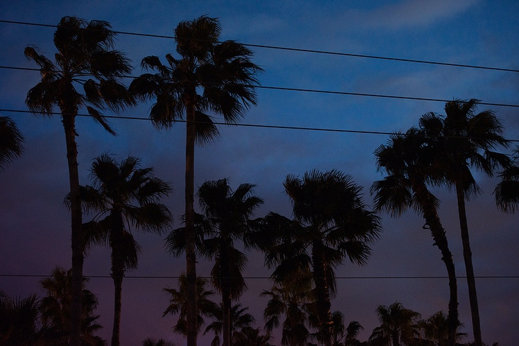 Southern Palms, Fort Lauderdale - ANDREW LITSCH, photographer