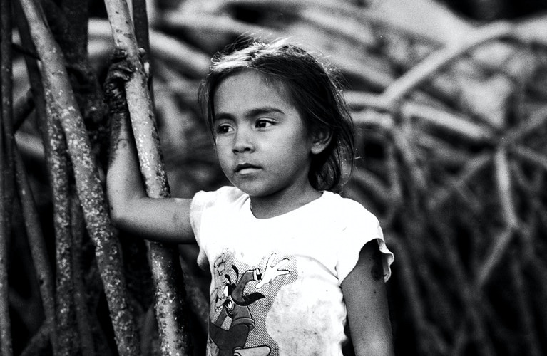 The Children Of The Mangroves - Andrew Tonn Photography LLC