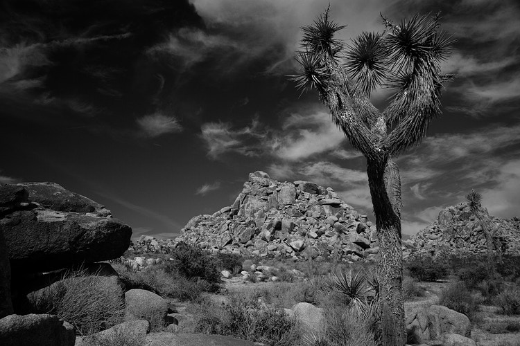Boulders and Joshua Tree - around the bend photos photography by Sheldon Ballard