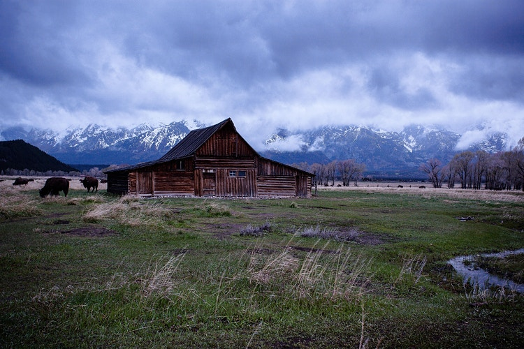 Mormon Row Barn with Buffalo - around the bend photos photography by Sheldon Ballard