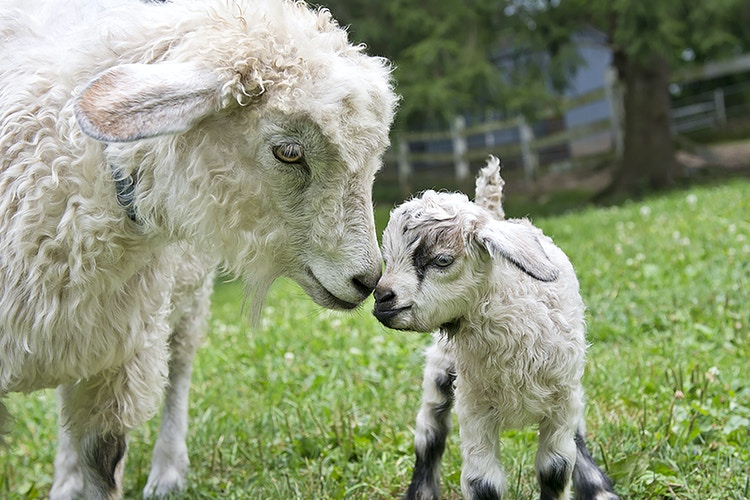 mother and child - Farm Animal Photography & Greeting Cards for Sale in NJ | Barnyard Moments