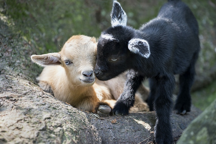 friendship - Farm Animal Photography & Greeting Cards for Sale in NJ   Barnyard Moments