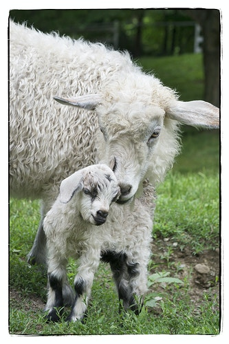 a mother's love - Farm Animal Photography & Greeting Cards for Sale in NJ | Barnyard Moments