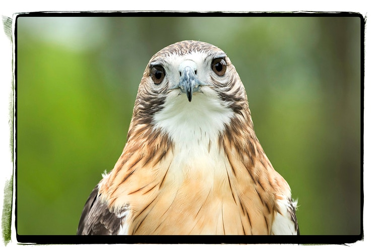 Feathers And Wings - Farm Animal Photography & Greeting Cards for Sale in NJ | Barnyard Moments