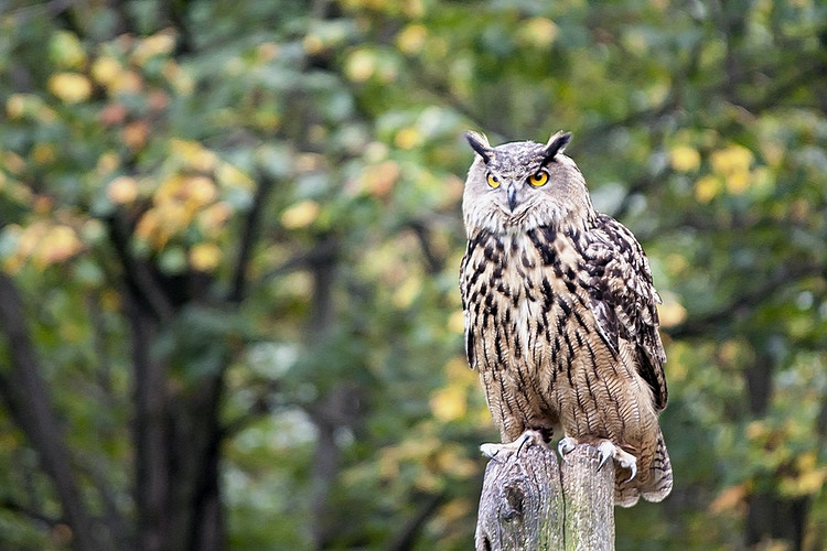 owl - Farm Animal Photography & Greeting Cards for Sale in NJ | Barnyard Moments