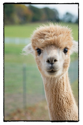 30 - Farm Animal Photography & Greeting Cards for Sale in NJ | Barnyard Moments