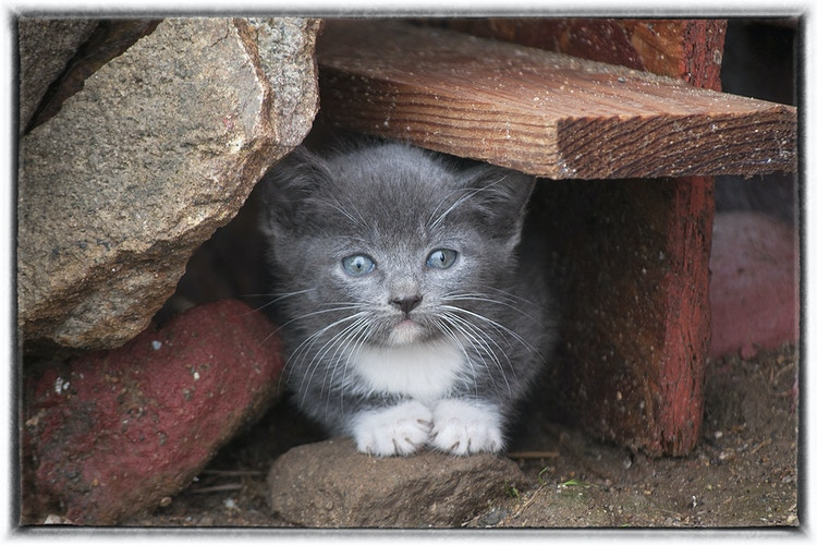 Kittens And Pups - Farm Animal Photography & Greeting Cards for Sale in NJ | Barnyard Moments