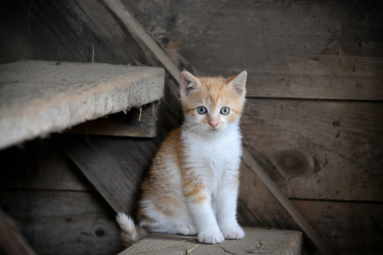 kitten in barn - Farm Animal Photography & Greeting Cards for Sale in NJ | Barnyard Moments
