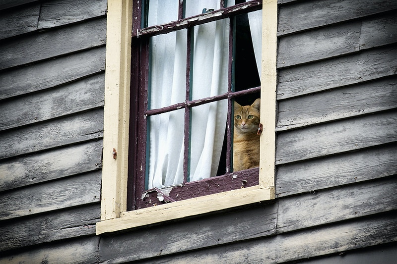 window seat - Farm Animal Photography & Greeting Cards for Sale in NJ | Barnyard Moments