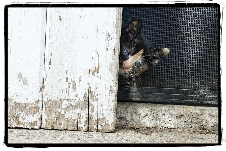 peek-a-boo - Farm Animal Photography & Greeting Cards for Sale in NJ | Barnyard Moments