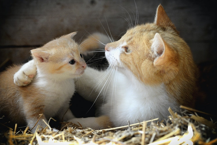 motherly advice - Farm Animal Photography & Greeting Cards for Sale in NJ | Barnyard Moments