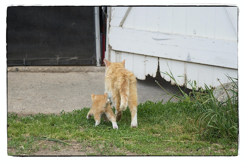 a walk with mom - Farm Animal Photography & Greeting Cards for Sale in NJ | Barnyard Moments