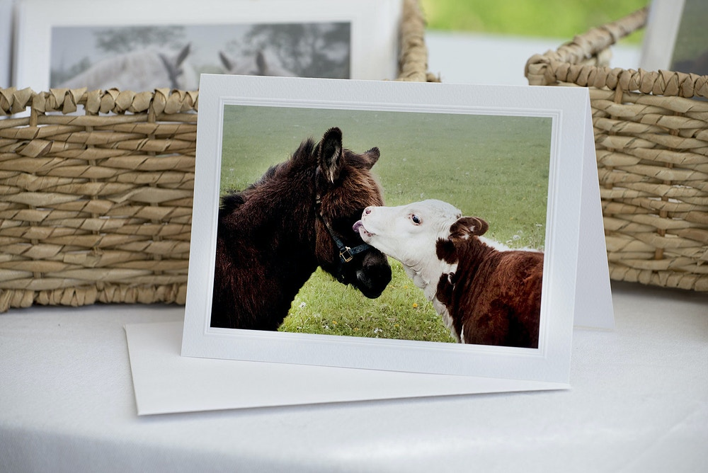 Products - Farm Animal Photography & Greeting Cards for Sale in NJ | Barnyard Moments