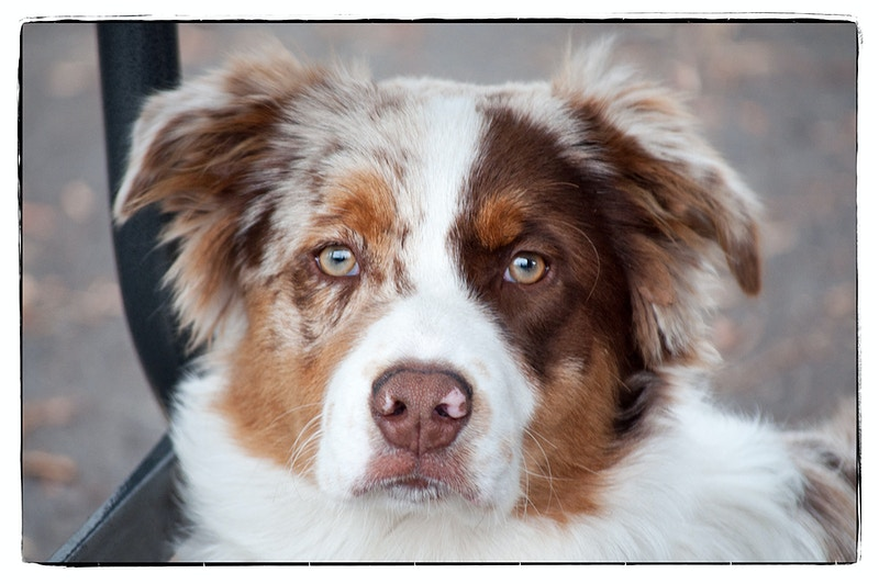 dog 1 - Farm Animal Photography & Greeting Cards for Sale in NJ | Barnyard Moments