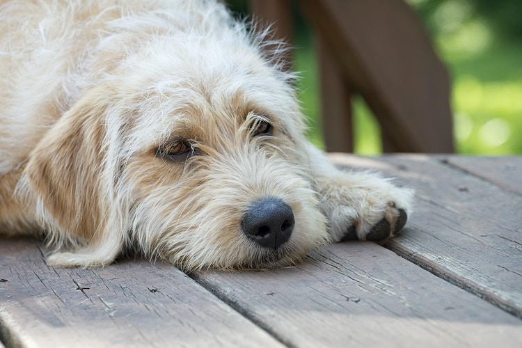 dog 3 - Farm Animal Photography & Greeting Cards for Sale in NJ | Barnyard Moments