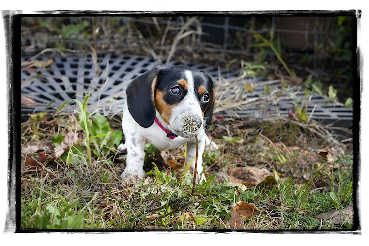 make a wish - Farm Animal Photography & Greeting Cards for Sale in NJ | Barnyard Moments