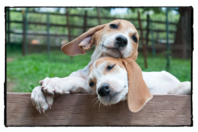 that's what friends are for - Farm Animal Photography & Greeting Cards for Sale in NJ | Barnyard Moments