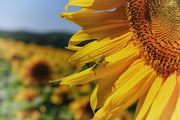 Flowers - Farm Animal Photography & Greeting Cards for Sale in NJ | Barnyard Moments