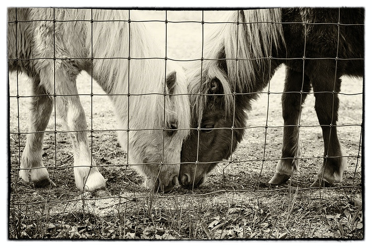 friendship - Farm Animal Photography & Greeting Cards for Sale in NJ | Barnyard Moments
