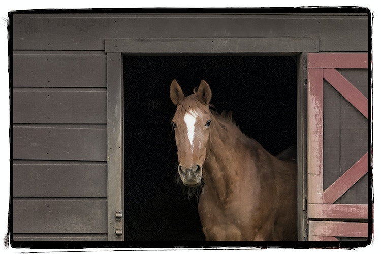 Horses And Other Barnyard Friends - Farm Animal Photography & Greeting Cards for Sale in NJ | Barnyard Moments