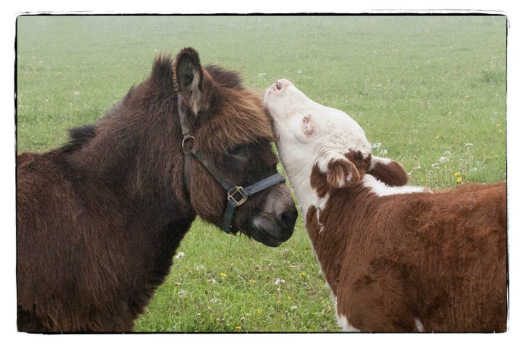 perfect fit - Farm Animal Photography & Greeting Cards for Sale in NJ | Barnyard Moments