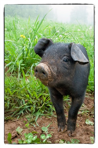 Adventures Unfold - Farm Animal Photography & Greeting Cards for Sale in NJ | Barnyard Moments