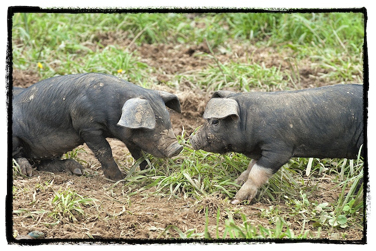 Seeing Eye to Eye - Farm Animal Photography & Greeting Cards for Sale in NJ | Barnyard Moments