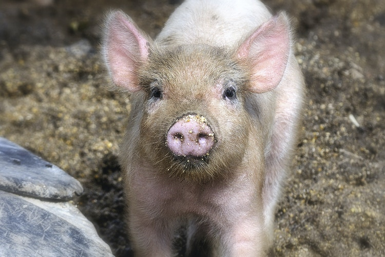 hello - Farm Animal Photography & Greeting Cards for Sale in NJ   Barnyard Moments