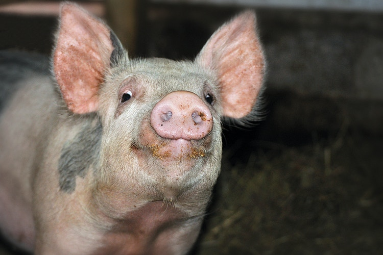 welcome to the barn - Farm Animal Photography & Greeting Cards for Sale in NJ | Barnyard Moments