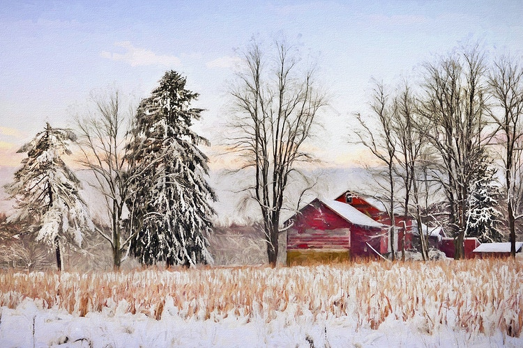 one winter morning - Farm Animal Photography & Greeting Cards for Sale in NJ | Barnyard Moments