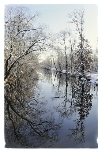 winter reflections - Farm Animal Photography & Greeting Cards for Sale in NJ | Barnyard Moments