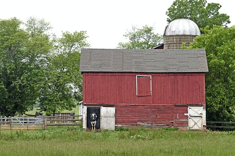 Annie's home - Farm Animal Photography & Greeting Cards for Sale in NJ | Barnyard Moments