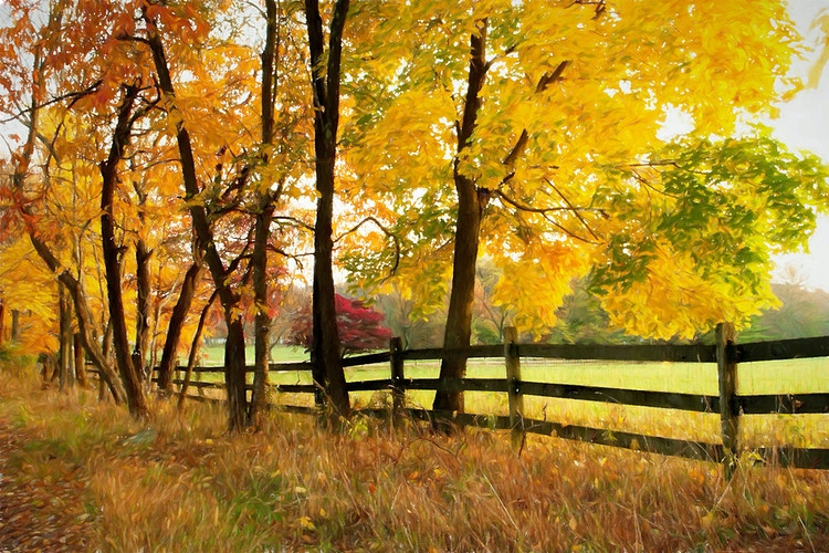 autumn in the country - Farm Animal Photography & Greeting Cards for Sale in NJ | Barnyard Moments