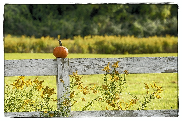 Scenery - Farm Animal Photography & Greeting Cards for Sale in NJ   Barnyard Moments