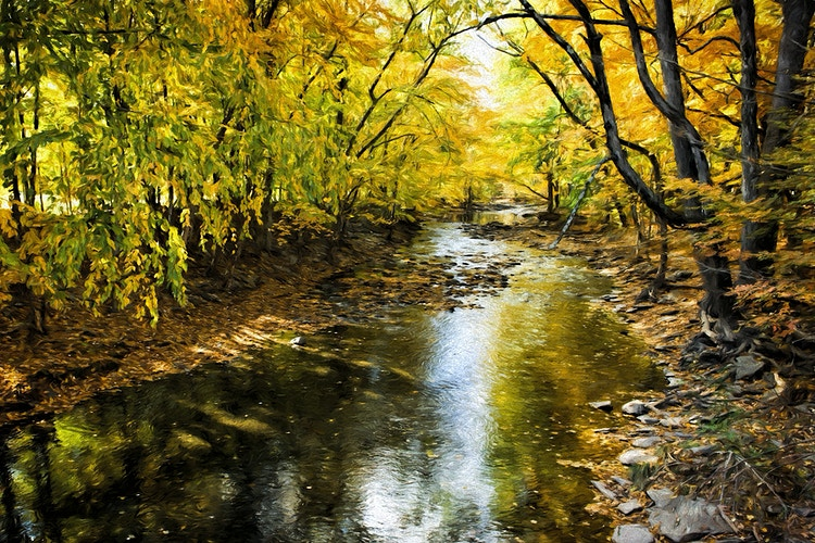 autumn in new york - Farm Animal Photography & Greeting Cards for Sale in NJ | Barnyard Moments