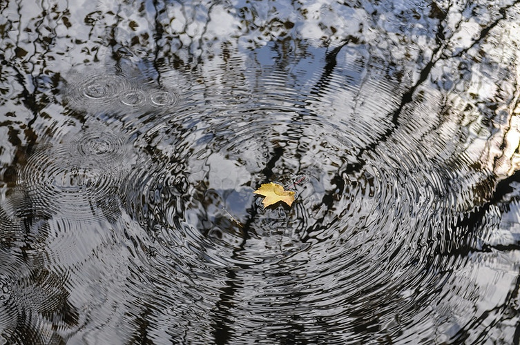 the ripple effect - Farm Animal Photography & Greeting Cards for Sale in NJ | Barnyard Moments