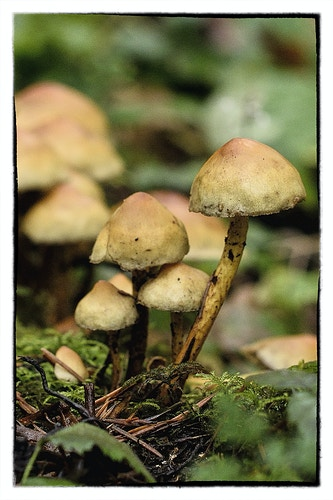 little mushrooms - Farm Animal Photography & Greeting Cards for Sale in NJ | Barnyard Moments