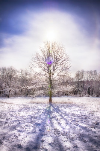 tree of light - Farm Animal Photography & Greeting Cards for Sale in NJ | Barnyard Moments