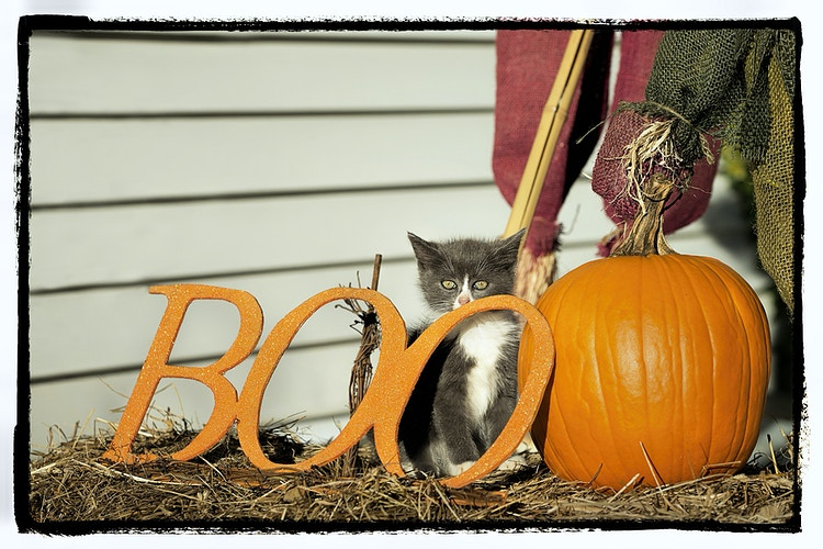 little boo - Farm Animal Photography & Greeting Cards for Sale in NJ | Barnyard Moments