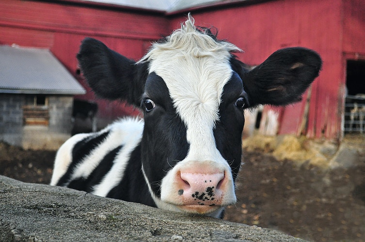 welcome to the barnyard - Farm Animal Photography & Greeting Cards for Sale in NJ | Barnyard Moments