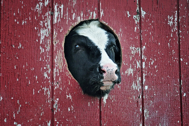 my little hole in the wall - Farm Animal Photography & Greeting Cards for Sale in NJ | Barnyard Moments