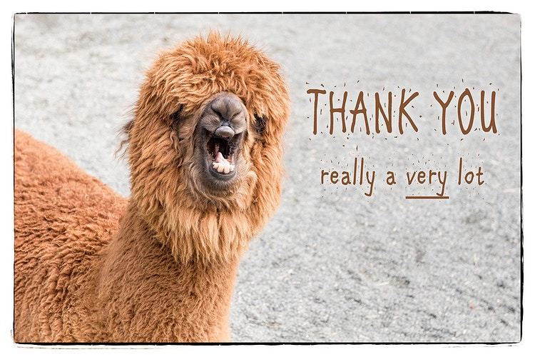 72 - Farm Animal Photography & Greeting Cards for Sale in NJ | Barnyard Moments